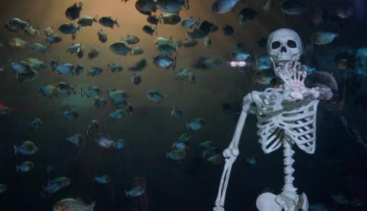 浅虫水族館の夜の水族館ハロウィンナイトは大人も楽しい件(青森市)