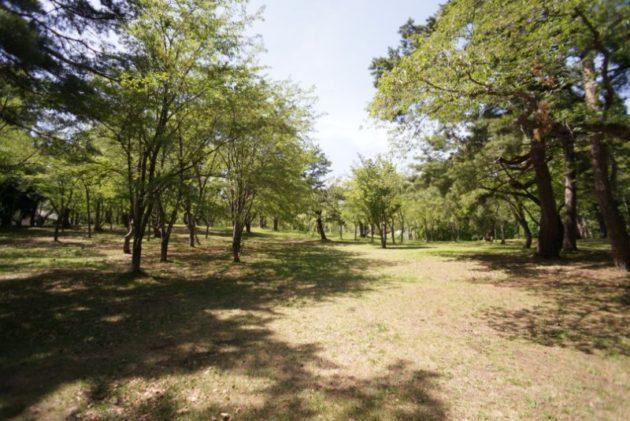 桜林公園2