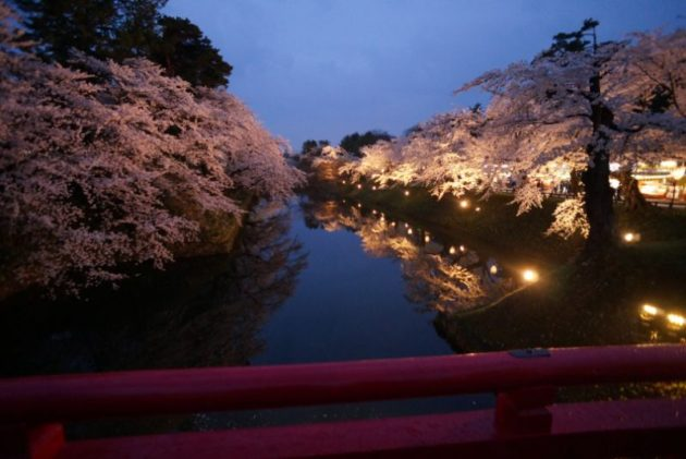 弘前さくらまつり2019杉の大橋からの桜