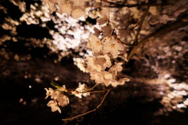 弘前さくらまつり2019夜桜アップ