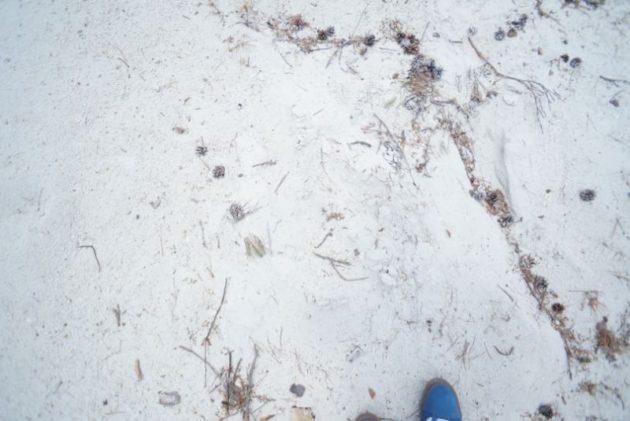 白岩森林公園の砂浜みたいな疑灰岩