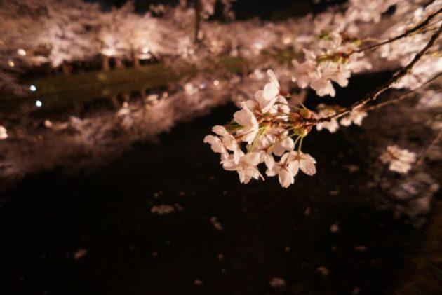 弘前さくらまつり2019の外堀と桜