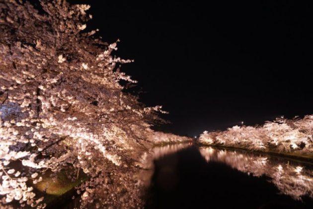 弘前さくらまつり2019桜のトンネル外から2