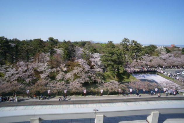 弘前さくらまつり2019市役所屋上からの眺め