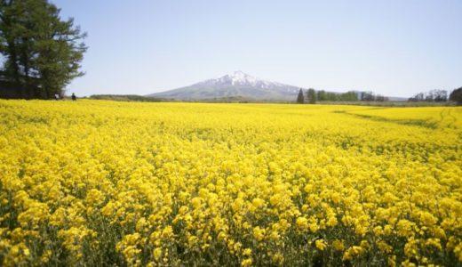【2019】鰺ヶ沢の菜の花畑見てきました(鰺ヶ沢町)