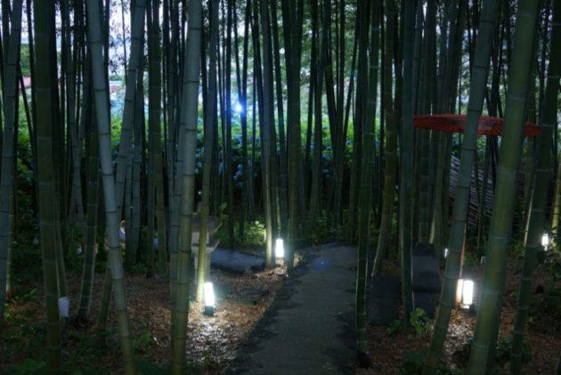 北浦雲昌寺の竹林2