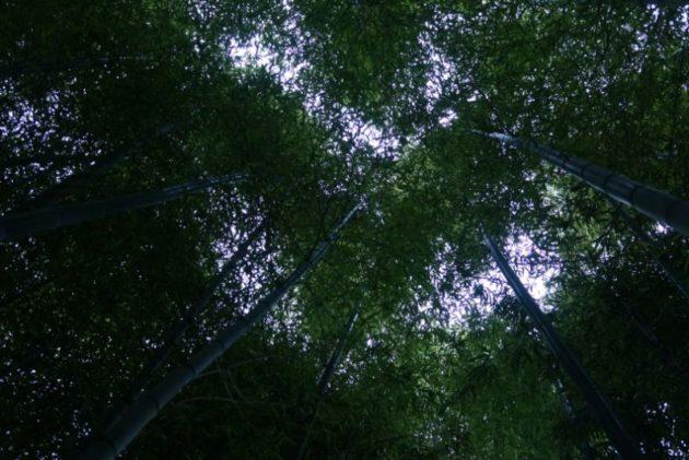 北浦雲昌寺の竹林