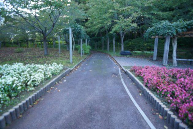 自覚院 白衣観音堂まではお花畑を過ぎて直進です